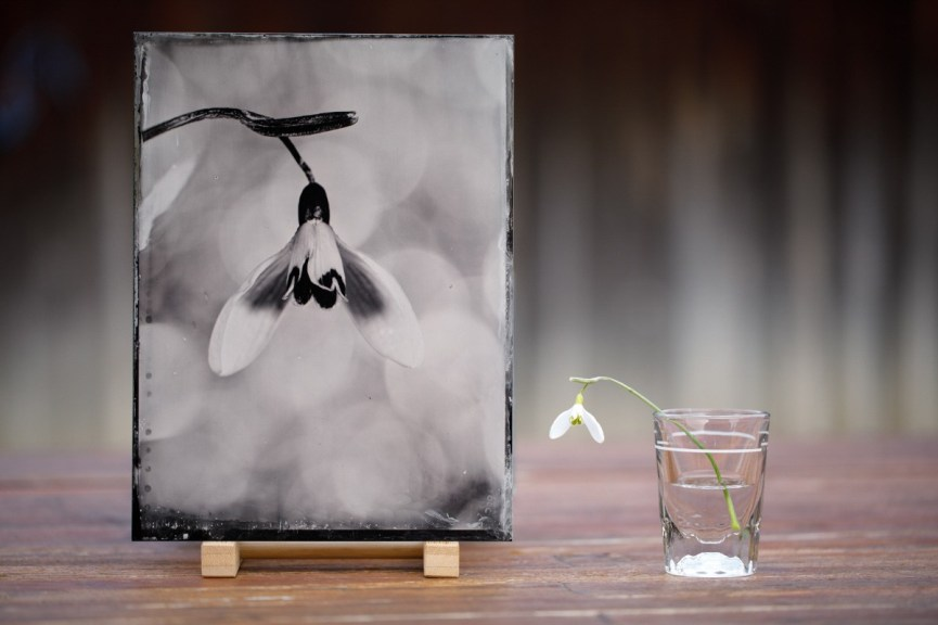 MH-The-Snowdrop-macro-shot-with-two-cameras-in-a-row-18x24cm-collodion-wetplate
