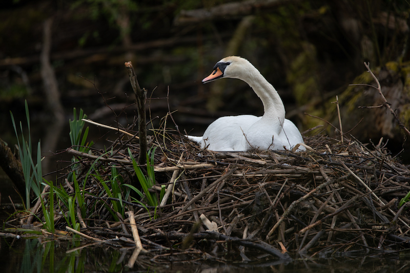 Z_digital_Canon_EOS_Swan_Expired_readyload_large_format_project_markus_hofstaetter_mhaustria.com15