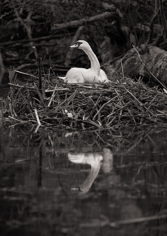 Z_digital_Canon_EOS_Swan_Expired_readyload_large_format_project_markus_hofstaetter_mhaustria.com16