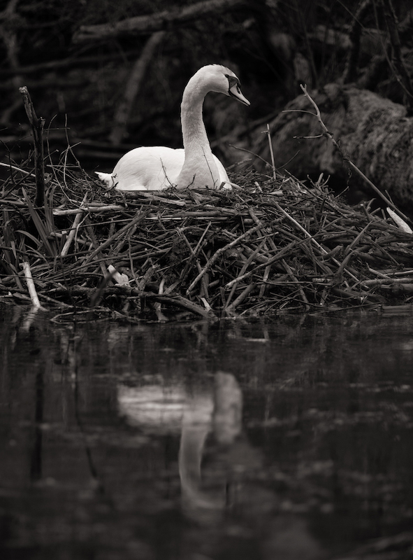 Z_digital_Canon_EOS_Swan_Expired_readyload_large_format_project_markus_hofstaetter_mhaustria.com17