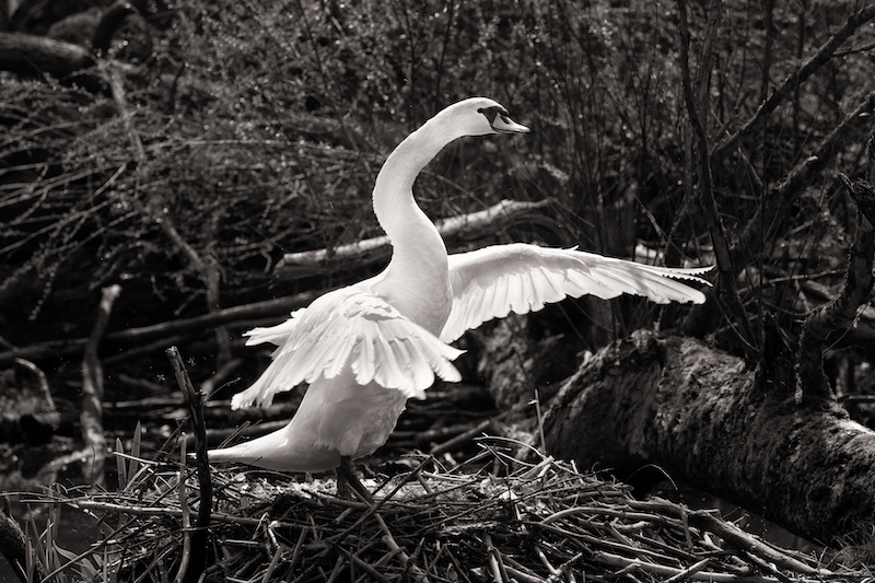 Z_digital_Canon_EOS_Swan_Expired_readyload_large_format_project_markus_hofstaetter_mhaustria.com4_