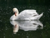 Z_digital_Canon_EOS_Swan_Expired_readyload_large_format_project_markus_hofstaetter_mhaustria.com29