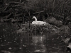 Z_digital_Canon_EOS_Swan_Expired_readyload_large_format_project_markus_hofstaetter_mhaustria.com6_