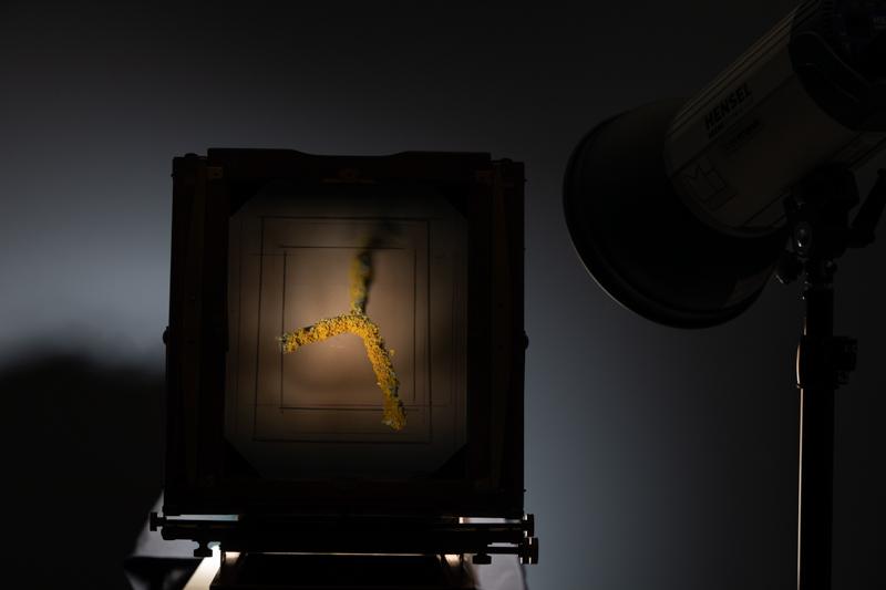 Markus_Hofstaetter_photographer_mhaustria_com_3d_printed_wet_plates_part_211