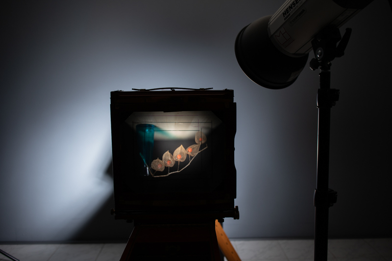 Markus_Hofstaetter_photographer_mhaustria_com_3d_printed_wet_plates_part_229
