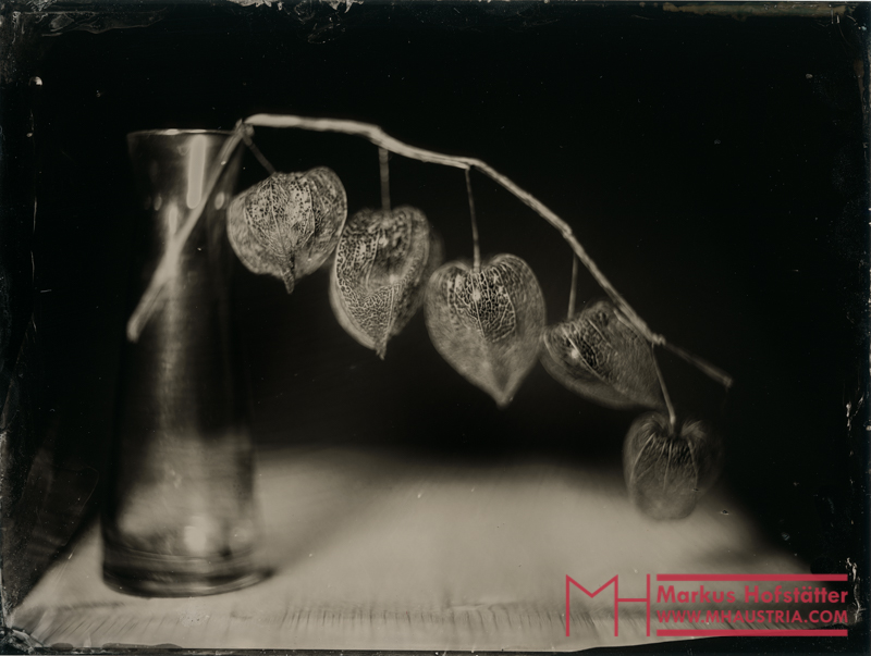 life-within-death-wet-plate-Markus-hofstaetter-mhaustria-com