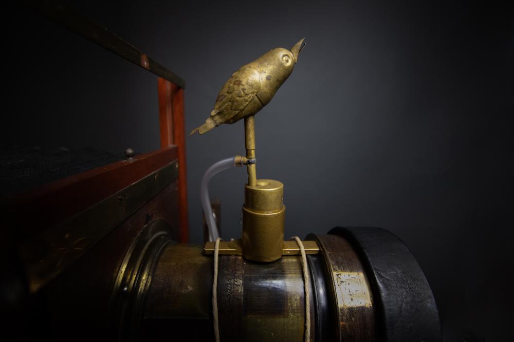 MArkus_Hofstaetter_watch_the_birdie_wet_plate_nassplatte_mhaustria.com3_